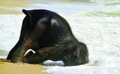 elephant.fail.JPG